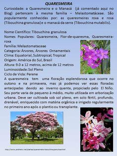 Barbara Paisagismo e Meio Ambiente: Floradas/Quaresmeira