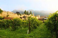 Durnstein - vineyards