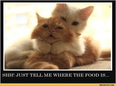 My cat used to do that
