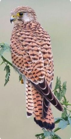 A selection of bird photos Kinds Of Birds, All Birds, Birds Of Prey, Love Birds, Pretty Birds, Beautiful Birds, Animals Beautiful, Exotic Birds, Colorful Birds