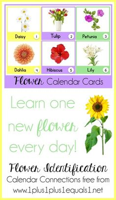 Flower Identification Calendar Connections ~ learn the names of 31 different flowers, with real photographs! {free}