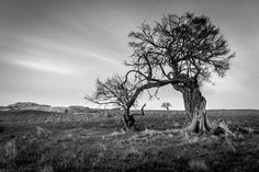 Old tree at Sunrise Photo by Cheryl Burnham -- National Geographic Your Shot