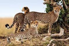 animales salvajes fotos gratis - Buscar con Google