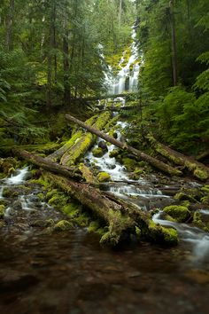 Proxy Falls Hike in the Three Sisters Wilderness of Central Oregon