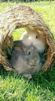 Buns in their hideout Cute Baby Bunnies, Funny Bunnies, Cute Baby Animals, Animals And Pets, Cute Babies, Cute Creatures, Beautiful Creatures, Animals Beautiful, Some Bunny Loves You