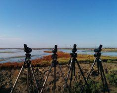 23 24 i 25 de setembre a Món Natura Delta de l'Ebre es fa el 3r Delta Birding Festival (@deltabirdingfestival). #dbf #dbf2016 #deltabirdingfestival #ornitologia @oryx_tiendanaturaleza #deltadelebre #Amposta #terresdelebre #birdwatching #vidaactiva #ebreactiu