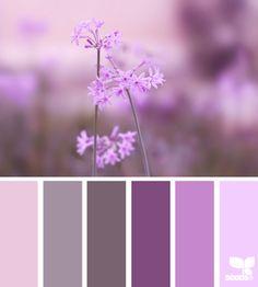 nature tones, by design seeds Colour Pallette, Colour Schemes, Color Combos, Color Patterns, Design Seeds, Coordination Des Couleurs, World Of Color, Color Swatches, My New Room