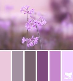 Nature Tones - http://design-seeds.com/index.php/home/entry/nature-tones11