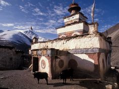 Stupa With Yaks at Dolpo, Nepal