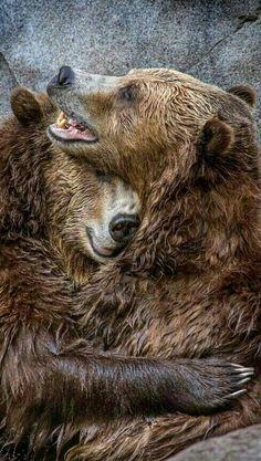 Giz a Cuddle!