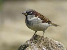 RSPB Big Garden Birdwatch