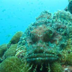 Scuba Dive Phi Phi Islands - Thailand