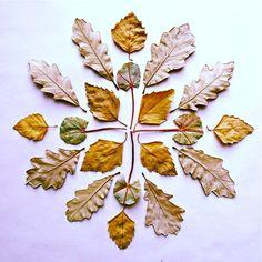 (A simple) leaf mandala.