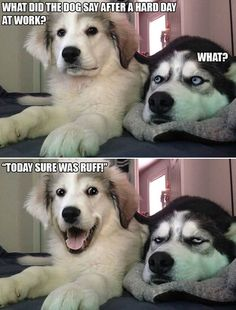 The internet is filled with all kind of memes like Moth Memes but doggo memes always make everyone smile. Let's giggly at some of the funniest and dank doggo memes. Also See- Funniest Black Panther Memes That Are Funny As Hell Puns Jokes, Sarcastic Jokes, Funny Puns, Dad Jokes, Dog Memes, Husky Jokes, Bad Puns, Pun Husky, Husky Humor