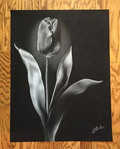 18x24 Black and White Charcoal on Black Pastel Paper Drawing of a  Tulip Original Modern Drawing