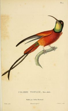 hummingbird 1829