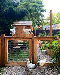 Backyard Farming, Chickens Backyard, Backyard Landscaping, Farm Gardens, Outdoor Gardens, Dream Garden, Home And Garden, Chicken Garden, Hobby Farms