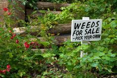 Weeds for Sale!