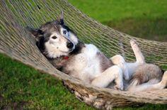 Они научат вас, как надо правильно расслабляться :)