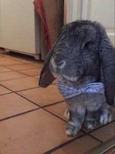 OH, HOLD ON. NOW WE HAVE A BUNNY IN A BOW TIE. | 22 Cute Animals Who Just Want You To Be Happy