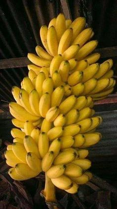Bananas from the Canaries Fruit And Veg, Fruits And Vegetables, Fresh Fruit, Exotic Fruit, Tropical Fruits, Fruit Picture, Fruit Photography, Beautiful Fruits, Oranges And Lemons