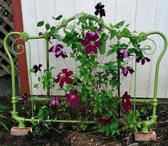 Vintage headboard used as a trellis for clematis