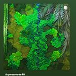 Вертикальное озеленение (@greenmoss48) • Фото и видео в Instagram Aquarium, Goldfish Bowl, Aquarium Fish Tank, Aquarius, Fish Tank