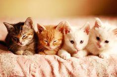 Quadruplet Kittens!!