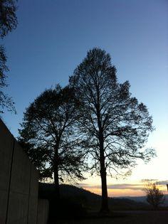cimitero Celestial, Sunset, Outdoor, Outdoors, Sunsets, Outdoor Games, The Great Outdoors, The Sunset