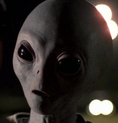 A Grey Alien. Yes, the real deal... :)