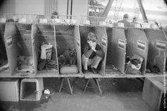 A young owner crouches in one of the stalls during the Pup of the Year dog show at Olympia 1974 London Dog Show, Stalls, Mug Shots, Olympia London, 19th Century, Pup, Two By Two, History, City