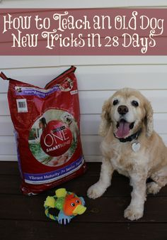 We're teaching our 12 year old dog to live a fuller life with the help of Purina One! #OneDifference #pmedia