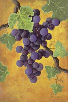 Jennifer Lorton - Red Wine Grapes - art prints and posters