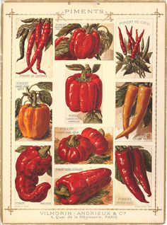 French Chart of Peppers, C.1900   One Kings Lane