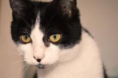 ENRICO - Gato adoptado - AsoKa el grande