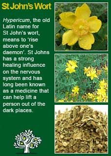 Richard Whelan ~ Medical Herbalist ( Iperico ) - All About Gardens Healing Herbs, Medicinal Plants, Natural Health Remedies, Herbal Remedies, Natural Herbs, Natural Healing, Natural Medicine, Herbal Medicine, Herbs For Health
