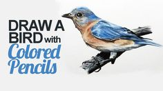 "Learn how to draw a bird with colored pencils in this lesson that also looks at the use of the Derwent Studio line. Check out ""The Colored Pencil Course"" at ..."