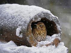 Een vogel in de sneeuw
