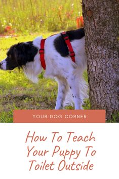 Puppies Stuff, Dog Stuff, Dogs And Puppies, Outside Dogs, Dog Corner, Easiest Dogs To Train, Some Funny Videos, Dog Hacks, Dog Boarding