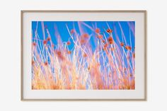 Canvas Frame, Canvas Wall Art, Desert Flowers, Red Flowers, Big Wall Art, Thing 1, Joshua Tree National Park, Tree Print, Flower Photos