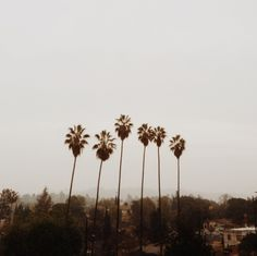 California daze.