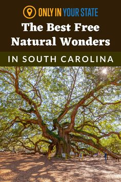 Visit these beautiful natural wonders in South Carolina for free! You'll enjoy ancient trees, unique forests, rivers, balancing rocks, and more. Photo by: JHVE Photo/Getty Images Pretty Place Chapel, South Carolina Coast, Congaree National Park, Best Bucket List, Edisto Beach, Angel Oak, Seo Tutorial, Johns Island, Seo For Beginners