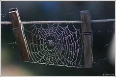 Didier Caron shared this very cool spider web with Google+