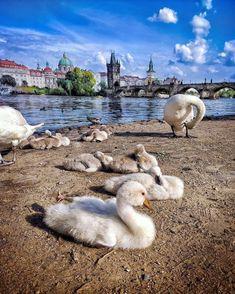 Bird, Animals, Prague, Animales, Animaux, Birds, Animal, Birdwatching, Animais