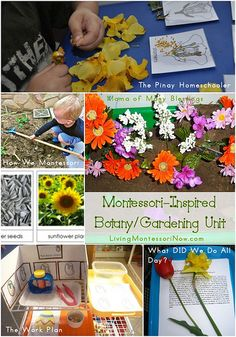 Montessori-Inspired Botany/Gardening Unit