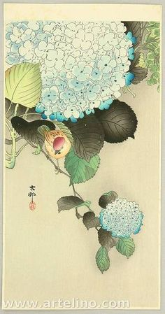ca. 1910-20 - Not dated - Shōson, Ohara - Sparrow on Hydrangea
