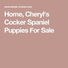 Home, Cheryl's Cocker Spaniel Puppies For Sale