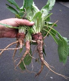 Foraging. 12 plants that can be foraged for a winter harvest | Suburban Foragers