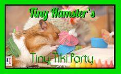 Tiny Hamster's Tiny Tiki Party (Ep. 6)