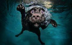 Underwater Dogs! Good things-